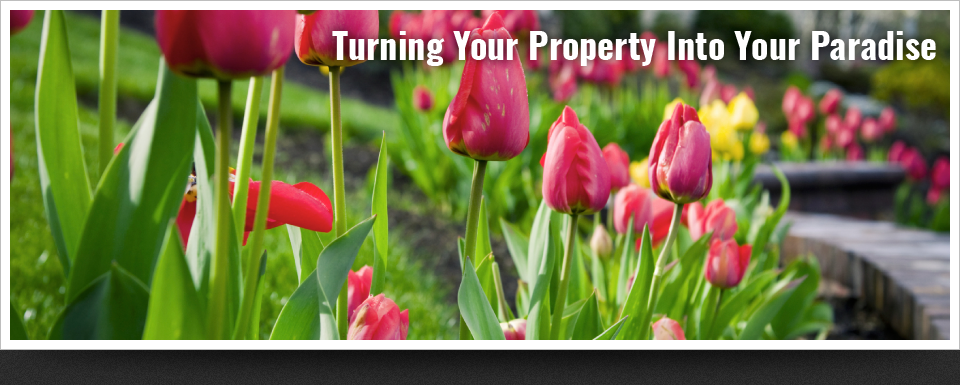 Turning Your Property Into Your Paradise | Tulips in a landscape bed